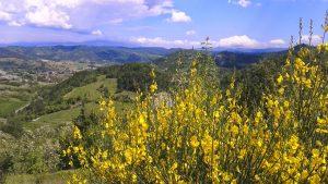 Casa Vacanza Fusina (Dogliani) – Alta Langa