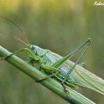 Casa Fusina (Dogliani) – Locusta