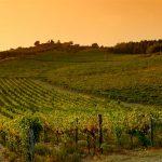 Casa Vacanze Fusina (Dogliani) – Vigne in autunno