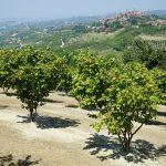 Casa Vacanze Fusina (Dogliani) – Noccioleto in Primavera
