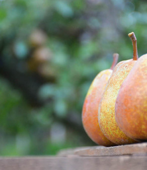 La pera Madernassa